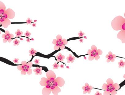 Hiroshima cherry tree